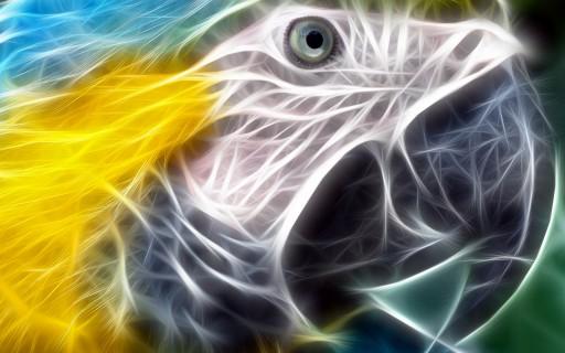 duch ptaka