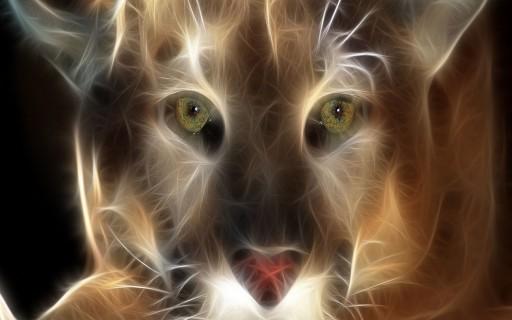 duch zwierzęcia,duchy zwierząt