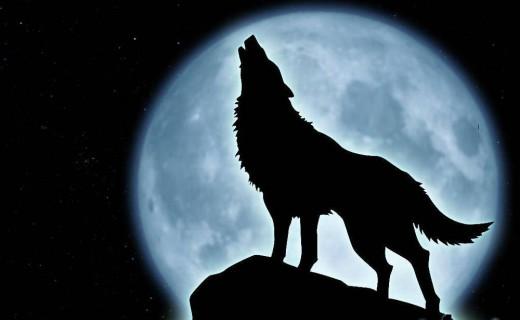 Wilk wyjacy do księżyca