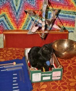 alternatywne leczenie kotka